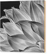 Black And White Dahlia Wood Print