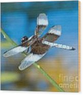 Black And White Dragonfly Wood Print