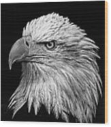 Black And White Eagle Wood Print
