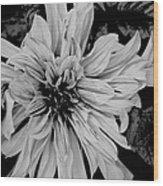 Black And White Floal Wood Print