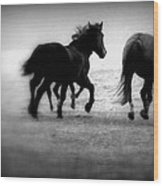 Black And White Horses Wood Print