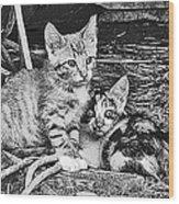 Black And White Kittens Wood Print