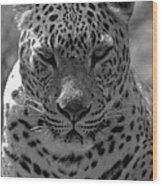 Black And White Leopard Portrait  Wood Print