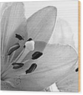 Black And White Lilies Wood Print