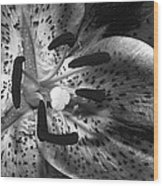Black And White Lily Up Close Wood Print