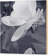 Black And White Lotus Wood Print
