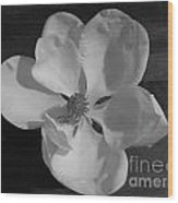 Black And White Magnolia Blossom Wood Print