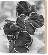 Black And White Maui Flowers Wood Print