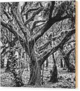 Black And White Maui Tree Wood Print