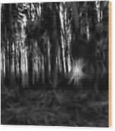 Black And White Monochrome Artistic Painterly Sun Between Trees  Wood Print