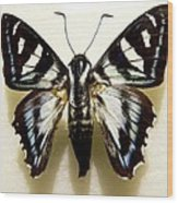 Black And White Moth Wood Print