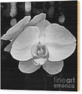Black And White Orchid With Lights - Square Wood Print