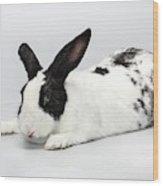 Black And White Pet Rabbi Wood Print