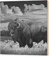 Black And White Photograph Of An American Buffalo Wood Print