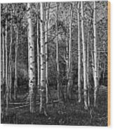 Black And White Photograph Of Birch Trees No. 0126 Wood Print