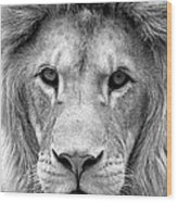 Black And White Portrait Of A Lion Wood Print