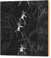 Black And White Quad Ghost Orchid Wood Print