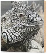 Black And White Saurian Animal Nature Iguana Wood Print