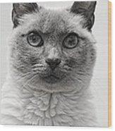 Black And White Siamese Cat Wood Print
