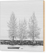 Black And White Square Diptych Tree 12-7693 Set 1 Of 2 Wood Print