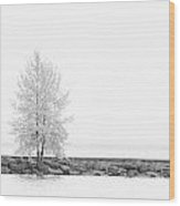 Black And White Square Diptych Tree 12-7693 Set 2 Of 2 Wood Print