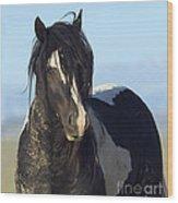 Black And White Stallion Comes Close Wood Print
