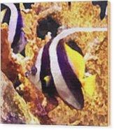 Black And White Striped Angelfish Wood Print