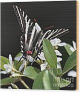 Black And White Swallowtail Square Wood Print