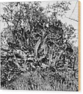 Black And White Uprooted Tree Wood Print