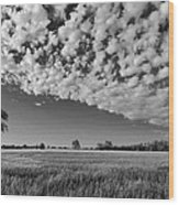 Black And White Wheat Field Wood Print
