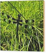 Black And White Winged Dragonfly Wood Print