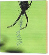 Black And Yellow Argiope - Spider Silhouette 02 Wood Print