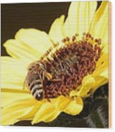 Black And Yellow Bee Beauty Wood Print