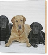 Black And Yellow Labradors With Puppy Wood Print