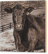 Black Angus In The Field Wood Print