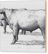 Black Angus Steers On Almshouse Road Wood Print by William Beauchamp