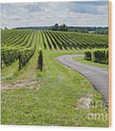 Maryland Vinyard In August Wood Print
