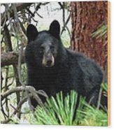 Black Bear 1 Wood Print
