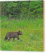 Black Bear Along Yellowhead Highway-bc Wood Print