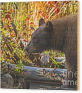 Black Bear Autumn Wood Print