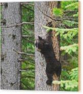 Black Bear Cub Climbing A Pine Tree Wood Print