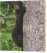 Black Bear Cub Wood Print