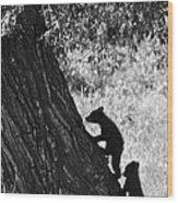 Black Bear Cubs Climbing A Tree Wood Print