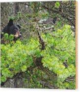 Black Bear Family In A Tree Wood Print