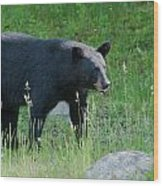 Black Bear Female Wood Print