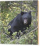 Black Bear II Wood Print