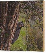 Black Bear In A Tree Wood Print