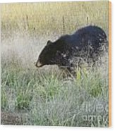 Black Bear In Autumn Wood Print