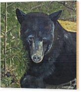 Bear Painting - Scruffy - Profile Cropped Wood Print