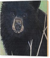 Black Bear Staredown Wood Print